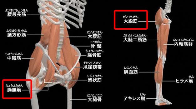 大殿筋・腸腰筋